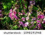 orchid flower garden   Shutterstock . vector #1098191948
