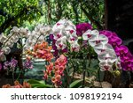orchid flower garden   Shutterstock . vector #1098192194