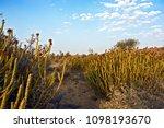 the vegetation of the thar...   Shutterstock . vector #1098193670