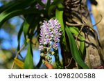 orchids bloom brace reflect the ...   Shutterstock . vector #1098200588