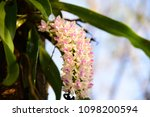orchids bloom brace reflect the ...   Shutterstock . vector #1098200594
