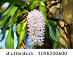 orchids bloom brace reflect the ...   Shutterstock . vector #1098200600