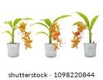 beautiful of orange orchid...   Shutterstock . vector #1098220844