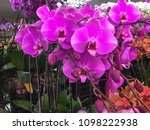fresh beautiful vivid orchid in ...   Shutterstock . vector #1098222938