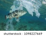plastic pollution and fish.... | Shutterstock . vector #1098227669
