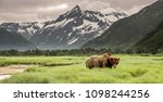grizzly bear of shores of... | Shutterstock . vector #1098244256