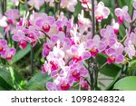 beautiful soft pink and violet...   Shutterstock . vector #1098248324
