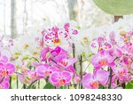 beautiful soft pink and violet...   Shutterstock . vector #1098248330