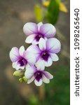 a bouquet of beautiful purple...   Shutterstock . vector #1098265640