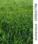 Small photo of grass grass grass