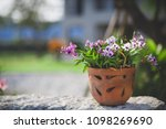 orchid in pots with sunlight....   Shutterstock . vector #1098269690