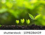 growing trees leader trees... | Shutterstock . vector #1098286439