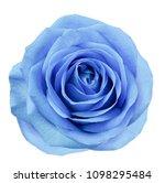 blue flower rose  on white... | Shutterstock . vector #1098295484