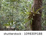 beautiful orchid flower or...   Shutterstock . vector #1098309188
