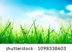 fresh juicy young grass in... | Shutterstock . vector #1098338603
