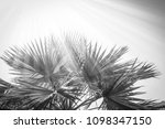 beautiful palm tree on the sea... | Shutterstock . vector #1098347150