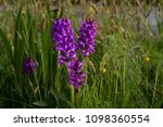 the beautiful wild orchids...   Shutterstock . vector #1098360554