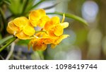 the bloom orchids in the garden ...   Shutterstock . vector #1098419744