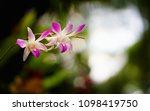the bloom orchids in the garden ...   Shutterstock . vector #1098419750