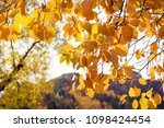 autumn leaves with yellow... | Shutterstock . vector #1098424454