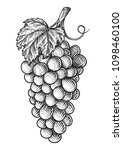 grapes hand drawn engraving... | Shutterstock .eps vector #1098460100