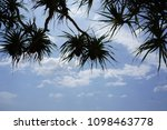 sky and tree at beach island... | Shutterstock . vector #1098463778