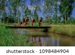 young boys jumping into river ...   Shutterstock . vector #1098484904