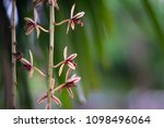 wild orchids in the jungle for...   Shutterstock . vector #1098496064