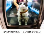 Stock photo veterinarian rehabilitation therapy to a cat on water 1098519410