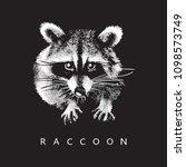 raccoon   realistic portrait on ... | Shutterstock .eps vector #1098573749