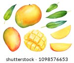 hand drawn watercolor set of... | Shutterstock . vector #1098576653