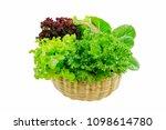 red oak   green oak   iceberg... | Shutterstock . vector #1098614780