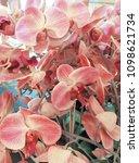 beautiful pink orchid...   Shutterstock . vector #1098621734