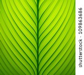 Texture Of A Green Leaf. Vecto...