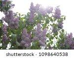 outdoor image of beautiful... | Shutterstock . vector #1098640538