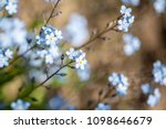 soft bokeh photo. small blue...   Shutterstock . vector #1098646679