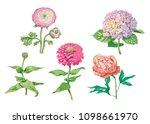 set of beautiful gentle flowers ... | Shutterstock .eps vector #1098661970