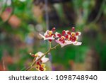 beautiful orchid flower   Shutterstock . vector #1098748940