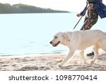 Stock photo young woman with her dog together on beach pet care 1098770414