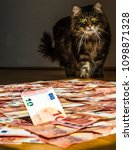 Small photo of Siberian longhair cat stalks money from shadows