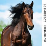 bay andalusian stallion in... | Shutterstock . vector #1098884579