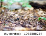 a photo with a very shallow... | Shutterstock . vector #1098888284