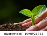 hand planting sapling in to... | Shutterstock . vector #1098928763