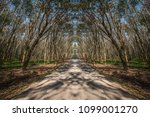long path in the summer fresh... | Shutterstock . vector #1099001270