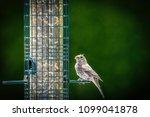 bird in nature | Shutterstock . vector #1099041878