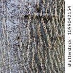 wooden texture closeup natural... | Shutterstock . vector #1099042154