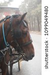 Small photo of A carriage driven by horses is a human transport vehicle.