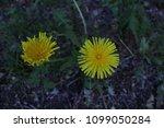 flower nature plants green... | Shutterstock . vector #1099050284