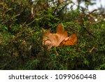 tree nature garden | Shutterstock . vector #1099060448