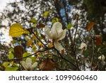 tree nature garden | Shutterstock . vector #1099060460
